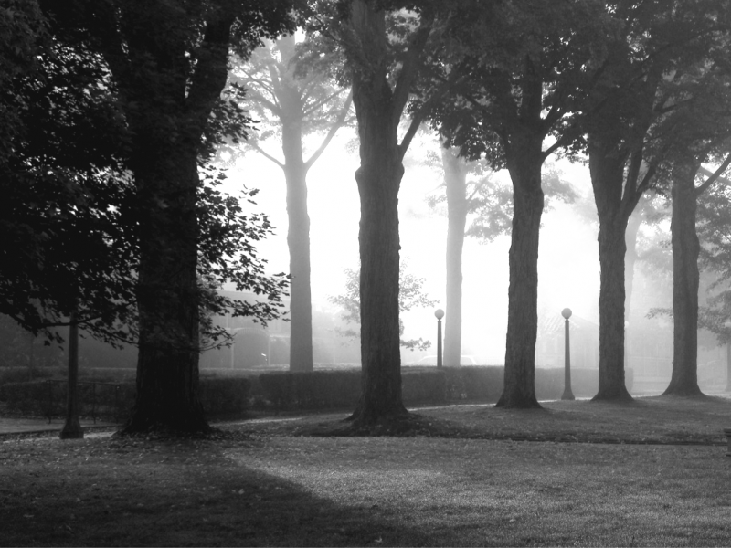 B&W image of Bestor Plaza trees in fog